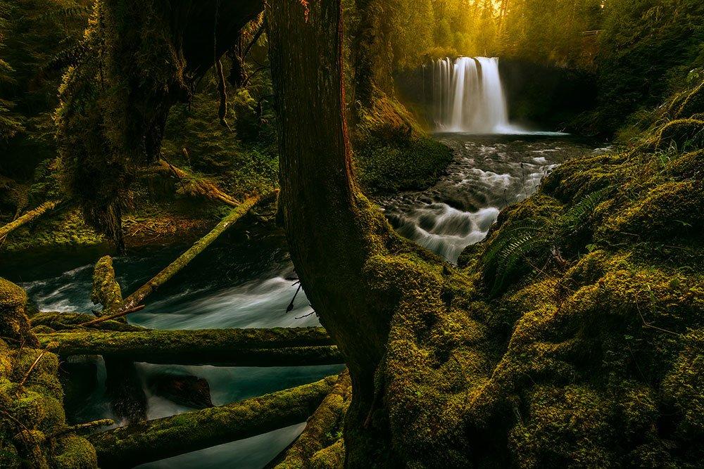 Mystical Koosah Falls