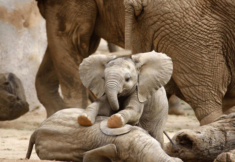 Baby-Elephant-1500pxLow