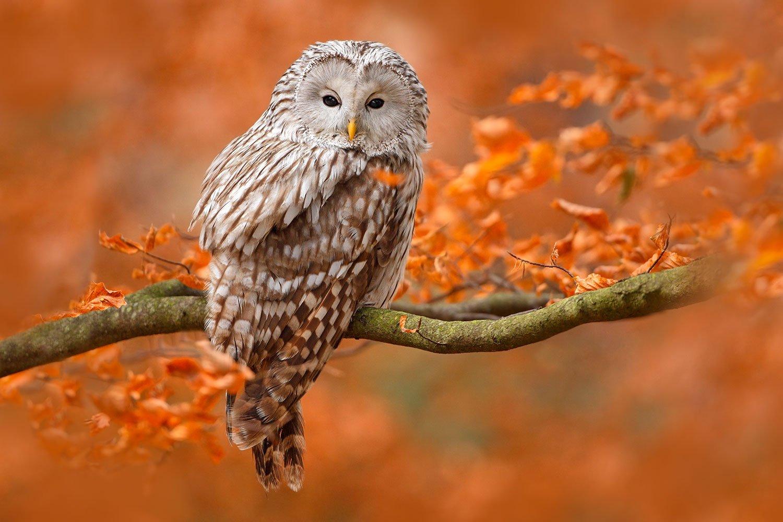 Owl-1500pxLow