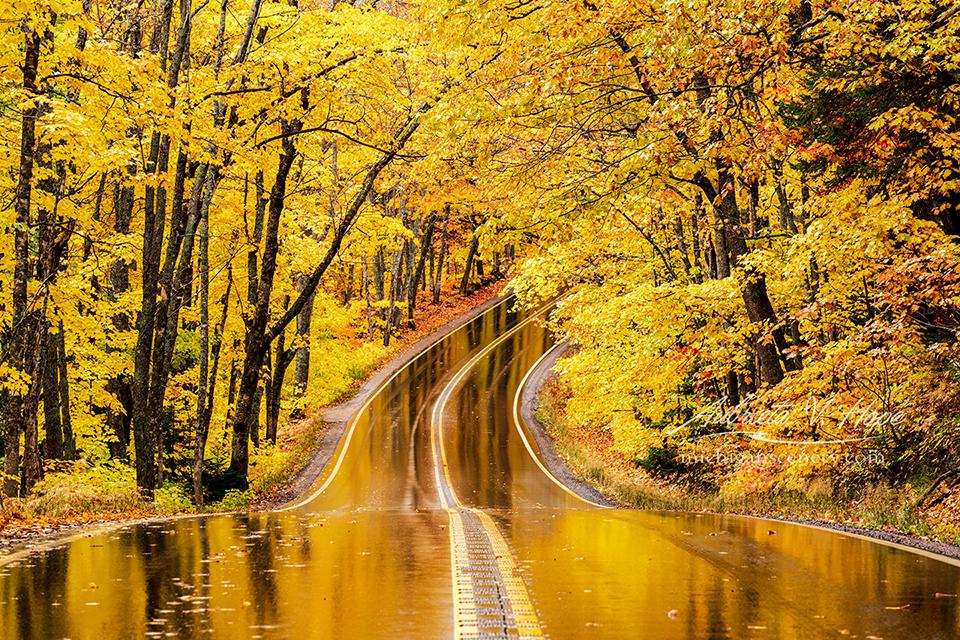 MI19-1067-9330_Golden_Road_by_Aubrieta_V_Hope_Mich