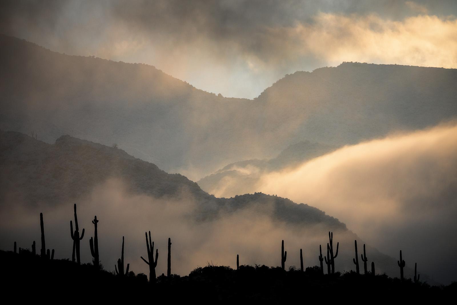 Sonoran_Winter_