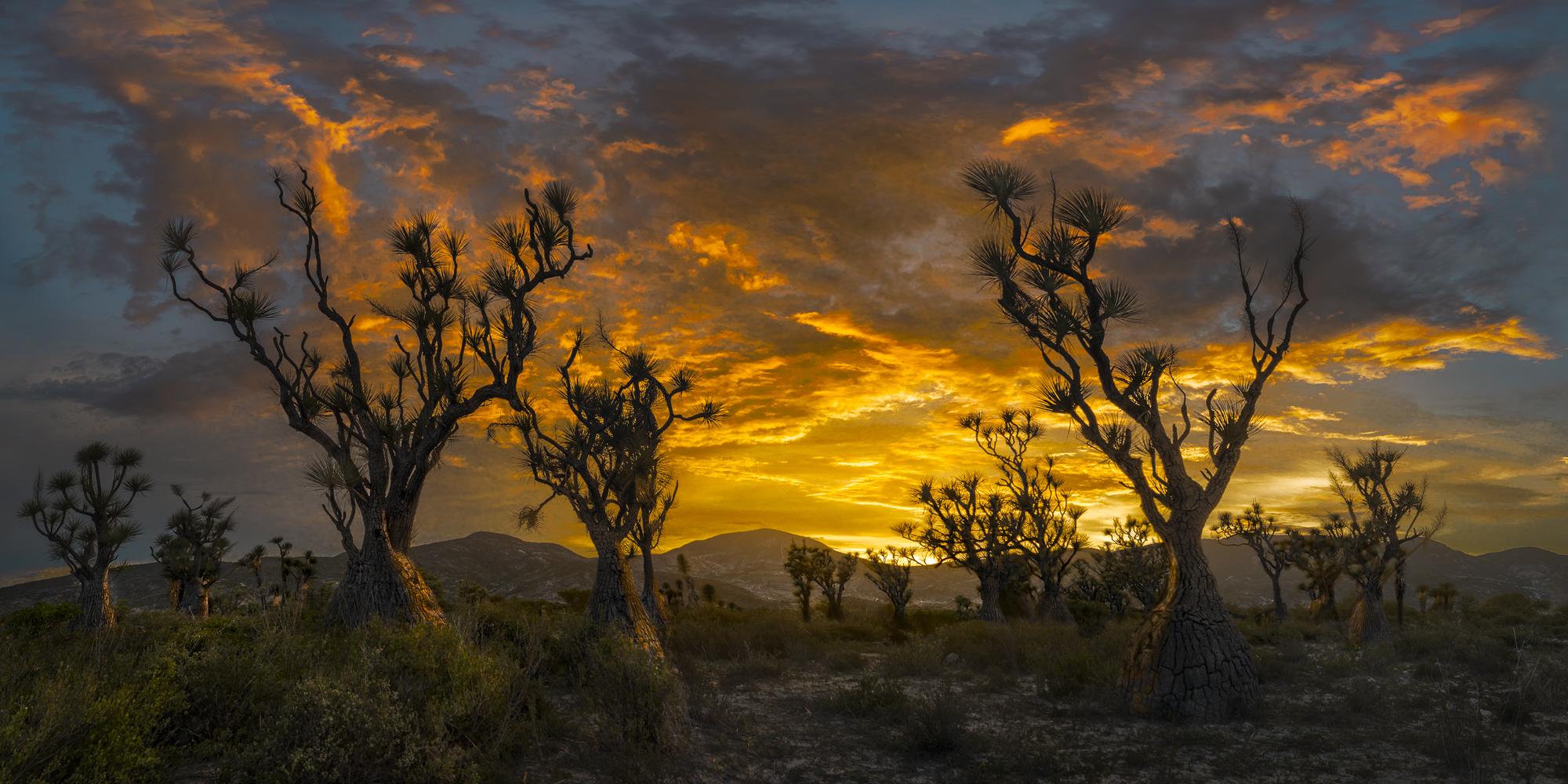 Sotolines-After-Sunset